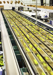 Fast conveyor belt, Fishbowl Blog