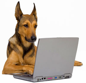 Dog using computer, Fishbowl Blog