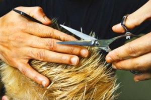 Haircut, Fishbowl Blog